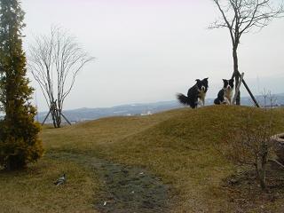 dog20080331 001
