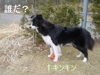 dog20080331 002