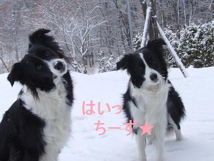 dog20080330 013