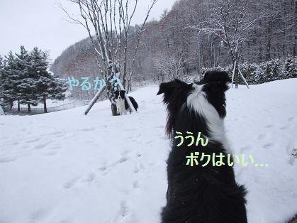 dog20080330 003