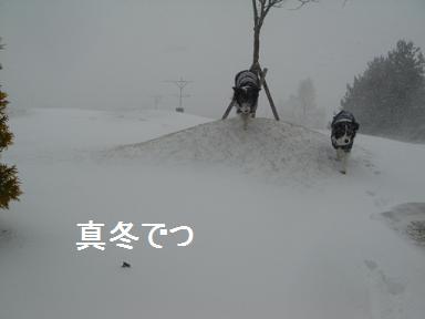 dog20080401 011