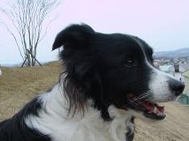 dog20080331 004