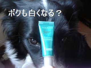 dog20080408 004