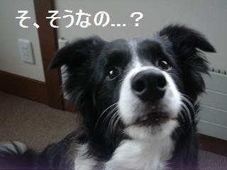 dog20080411 002