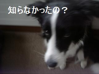 dog20080411 006
