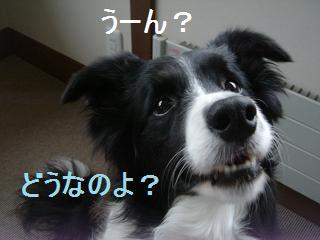 dog20080411 003
