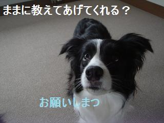 dog20080411 010