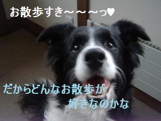 dog20080411 004