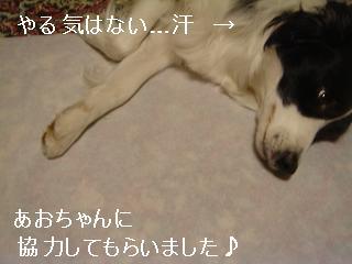 dog20080412 018