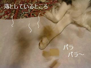 dog20080412 019