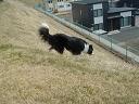 dog20080416 012