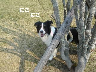 dog20080416 011