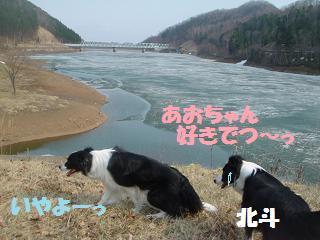 dog20080416 027