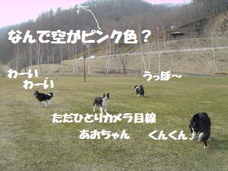 dog20080416 029