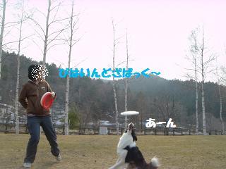 dog20080416 037
