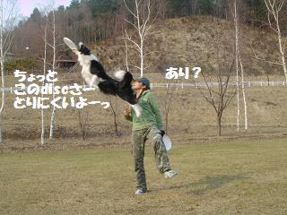 dog20080416 040