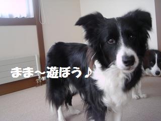 dog20080419 006