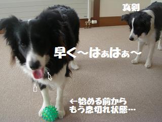 dog20080419 008