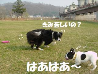 dog20080422 002