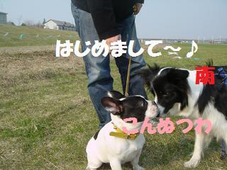 dog20080422 003