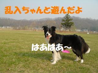 dog20080422 004