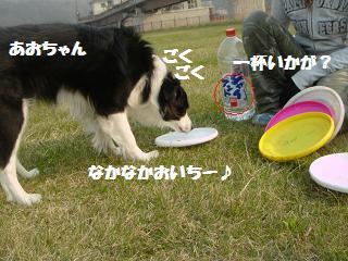 dog20080422 018