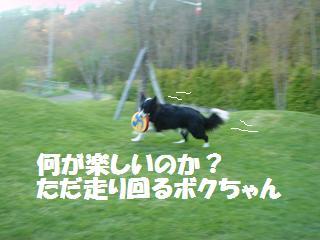 dog20080413 018