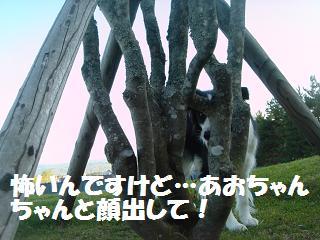 dog20080413 008