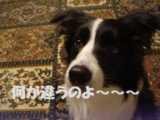 dog20080414 005