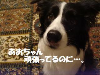 dog20080414 006