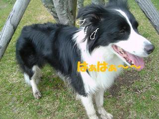dog20080415 002