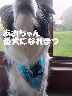 dog20080415 012