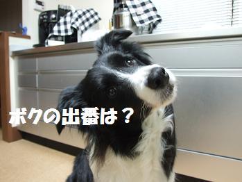 dog20080519 007