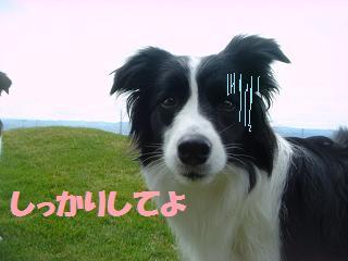 dog20080415 007