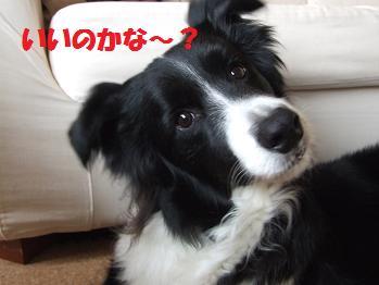 dog20080522 005