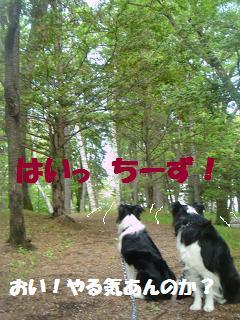 dog20080526 003