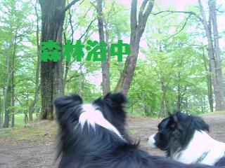 dog20080526 004