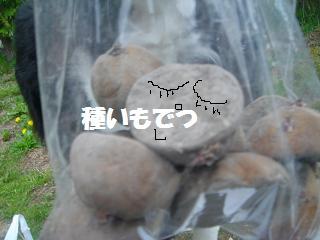 dog20080526 022