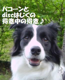 dog20080526 017