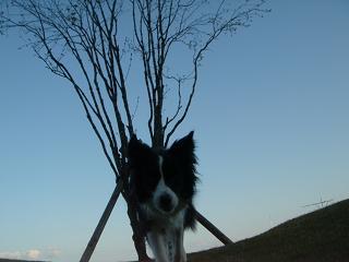 dog20080413 024