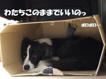 dog20080601 013