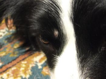 dog20080601 006