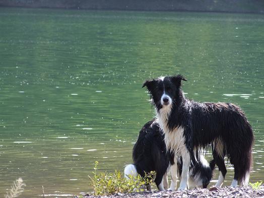 dog20080602 091