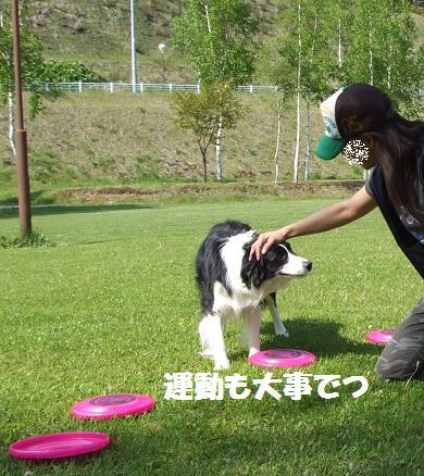 dog20080602 042