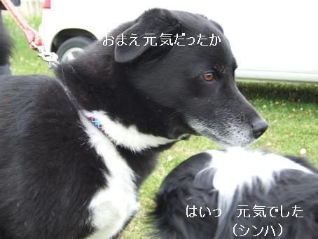 dog20080601 020