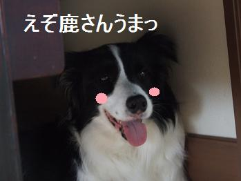 dog20080608 006