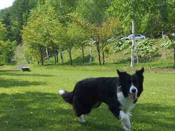 dog20080602 005