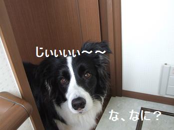 dog20080612 001