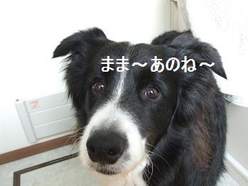 dog20080612 002