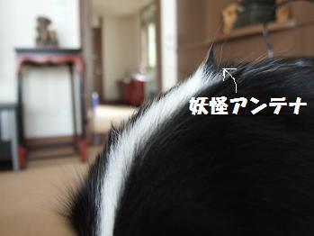 dog20080612 005